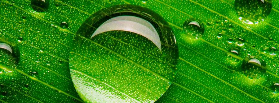 odontolgia-holistica-asensio